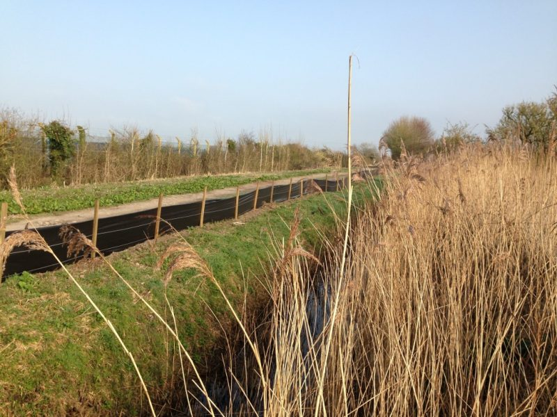 Great Crested Newt Mitigation